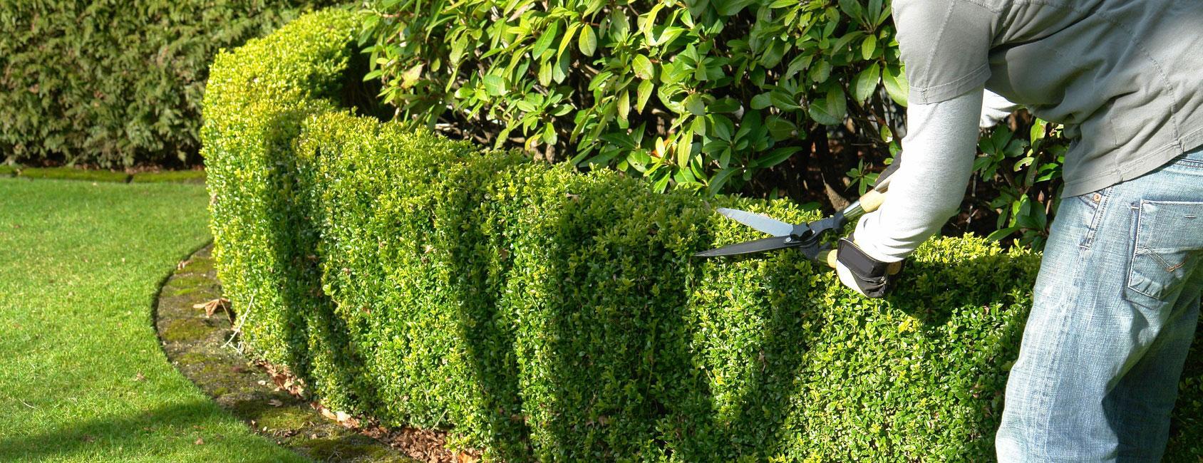 taille-arbre-haie-arbuste-fruitier-entretien-jardins-espaces-verts-94-aidlib