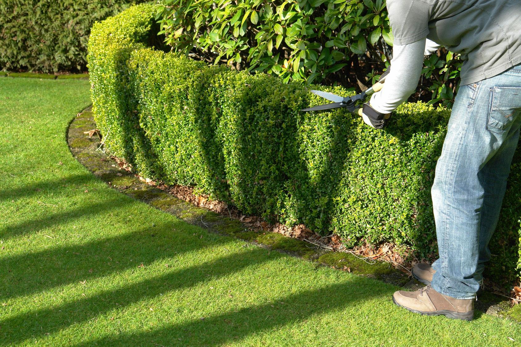 entretien jardin particulier 91