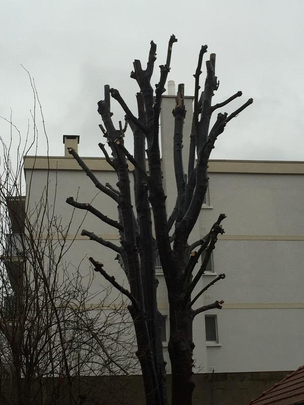 Lagage d 39 un arbre saint maur des foss s 94 aidlib for Prix de l elagage d un arbre