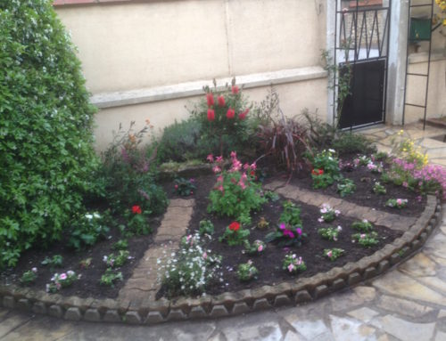 Massif de jardin  à  Saint-Maur 94