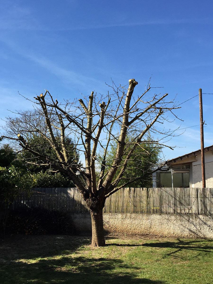 elagage-arbre-cerisier-draveil-91-après-aidlib