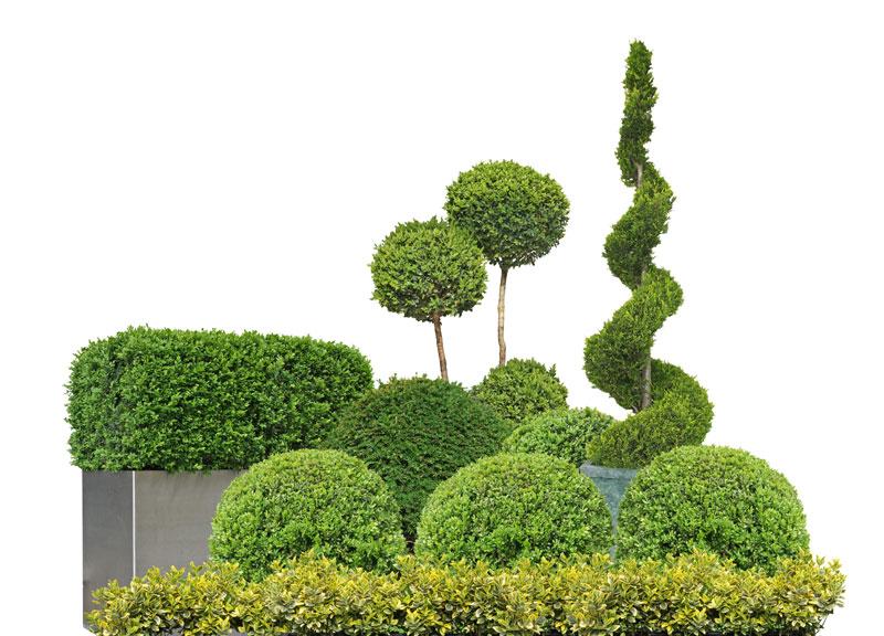 taille-arbustes-haies-94-aidlib-paysagiste-94