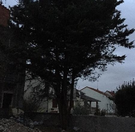 Abattage Vitry-sur-seine