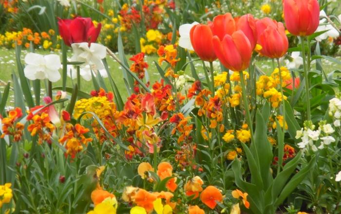 jardinier-plantation-massif