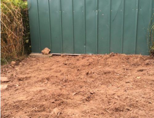 Dessouchage d'arbustes à Noiseau ( 94 )