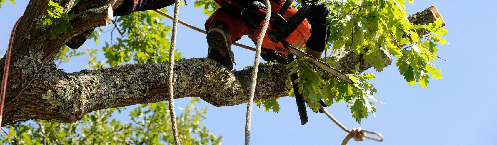 abattage-elagage-tous-types-arbres-jardins-94-aidlib