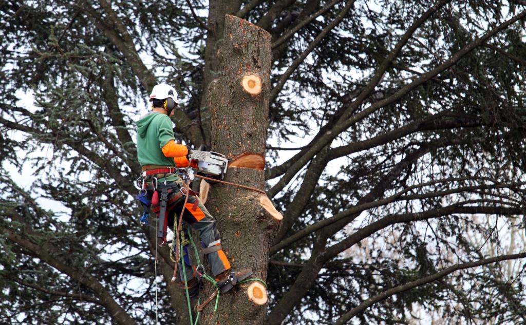 arbre-tous-type-abattage-94-aidlib