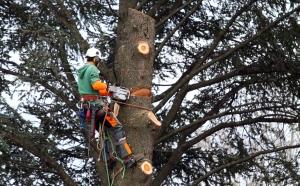 arbre-tous-type-abattage-94-aidlib-abbatage