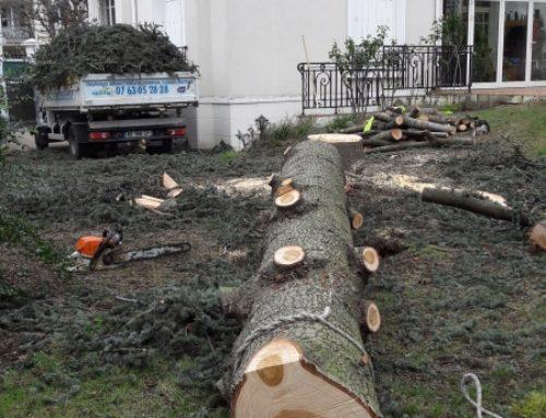 Abattage 94 d'un conifère Saint-Maur-des-Fossés