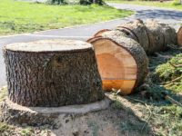 abattage-arbres-coupe-aidlib-espaces-verts-abattage-94