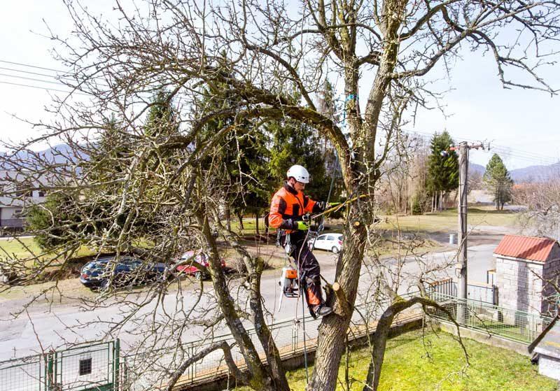 prix abattage arbre / tarif élagage arbre / élagueur 93 94