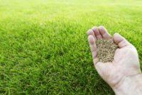 semis-pelouse-naturelle-aidlib-espaces-verts