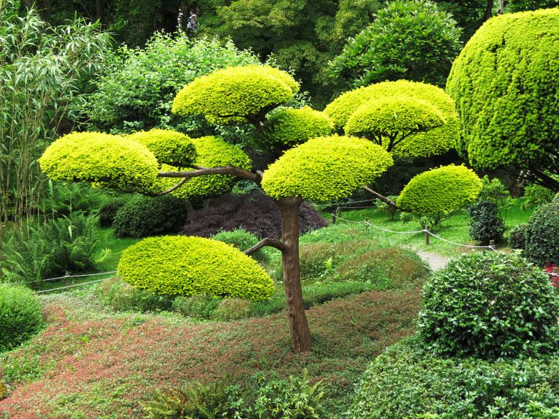 taille-haie-arbuste-Niwaki-aidlib-espaces-verts