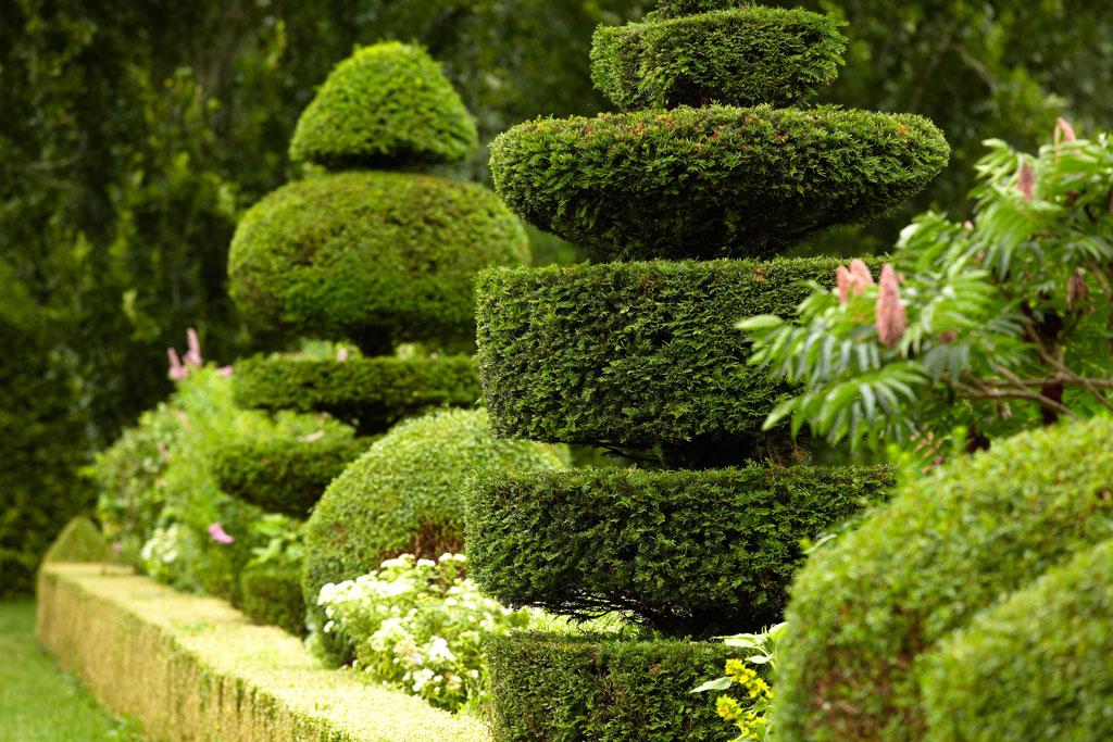 taille-haies-arbustes-aidlib-entretien-jardin