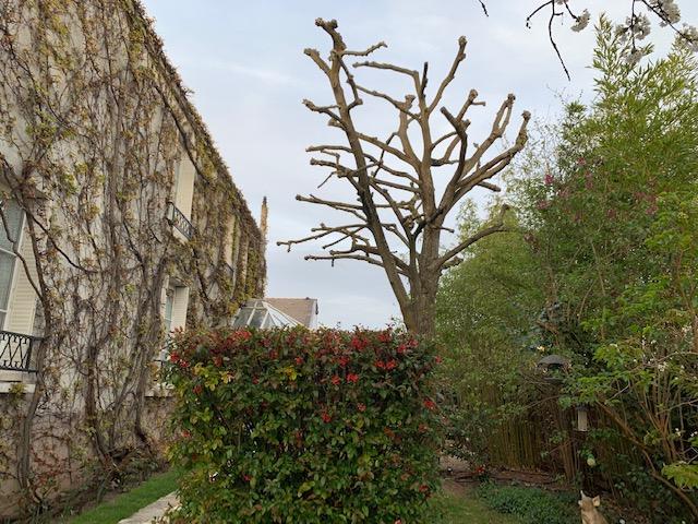 elagage-94-champigny-sur-marne-aidlib-4