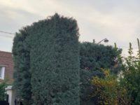 taille-haie-94-cupressus-aidlib