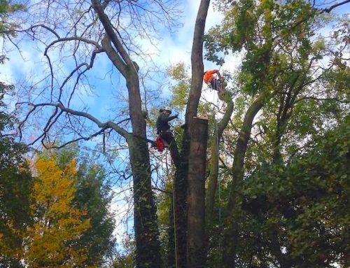 Élagage abattage arbres pour le Département 93