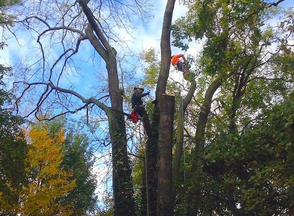 elagage abattage arbre