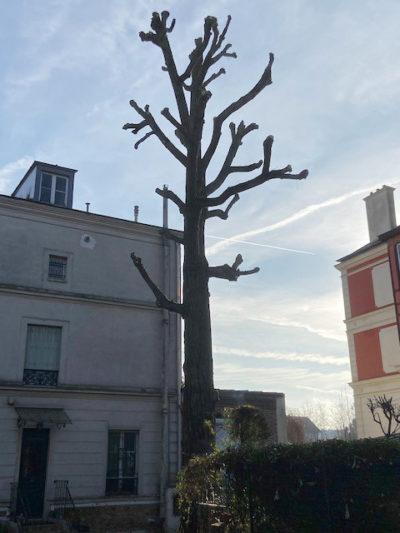 élagage-couper-branche-aidlib-elagueur-bourg-la-reine-elagage terminié