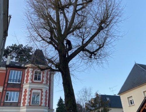 Intervention d'un élagueur grimpeur à Bourg-la-Reine