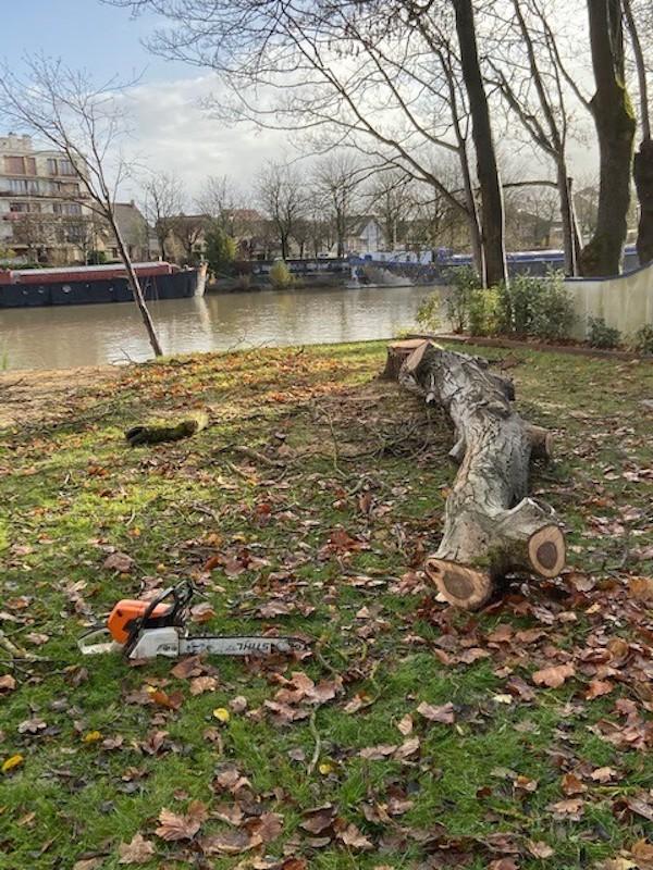 Abattage-arbre-créteil-