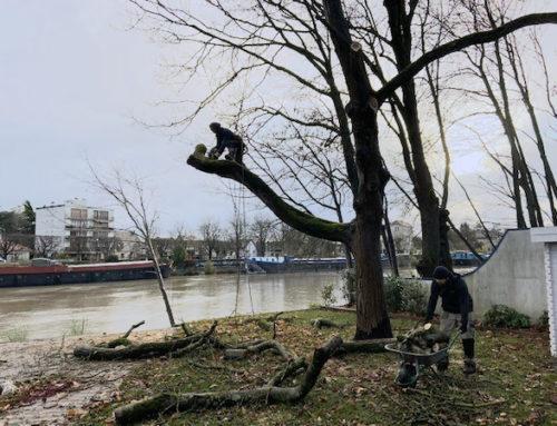Abattage arbre Créteil l'Église
