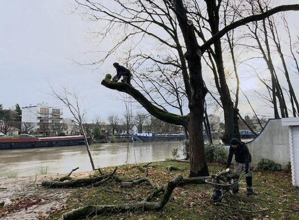 Abattage-arbre-créteil-eglise-aidlib-coupe branche